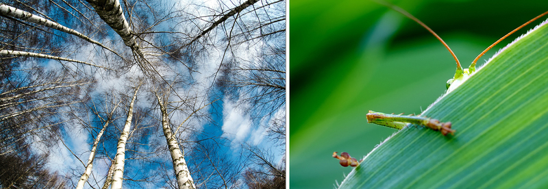 Nature Photography: Equipment, Settings and Tips